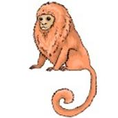 Affen Malvorlagen