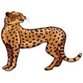 Ausmalbilder Leopard