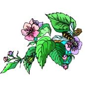 Gratis blumen ausmalbilder Blumen Malvorlagen