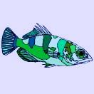 Malvorlagen fische for Zierfische barsch