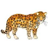 Wildtiere Ausmalbilder